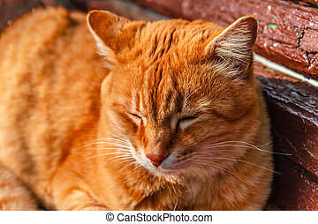Red cat lying on a bench and sleeping in the rays of sunlight