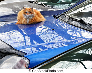Red cat on the car case