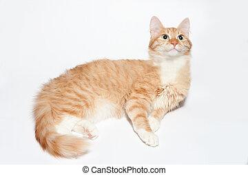 cat on white