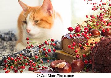 Red cat sitting on a windowsill looking on the garden. Autumn cat