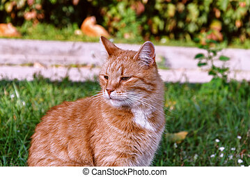 red cat sitting on the grass