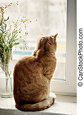 red cat sitting on the windowsill, looking out the window, next to a vase of flowers, mimosa
