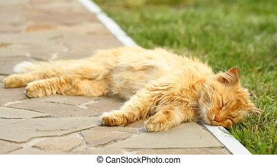 Red cat sleeping