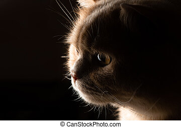 Red cat stares in surprise in the backlight against a dark background