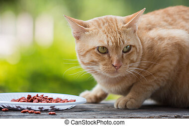 Red Cat with dish dry food