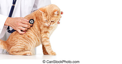 Red cat with veterinarian doctor. Veterinary clinic.