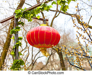 red chinese lamp on the tree in new year