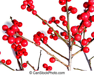 Red christmas berries on white 2