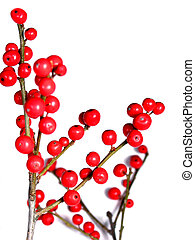 Red christmas berries on white 4