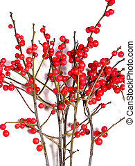 Red christmas berries on white 5