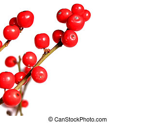 Red christmas berries on white