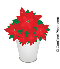 Red Christmas Poinsettia Flower in A Flower Pot