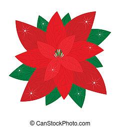 Red Christmas Poinsettia Flower on White Background