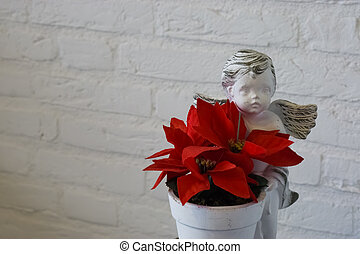 red christmas star flower in a flowerpot with angel statue, beautiful christmas decoration isolated on a white brick wall background.