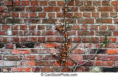 Red clay old brick wall