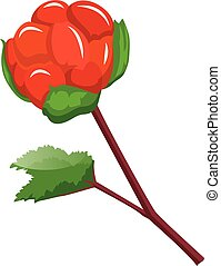 Red cloudberry on a branch with green leafs cartoon fruit vector illustration on white background.