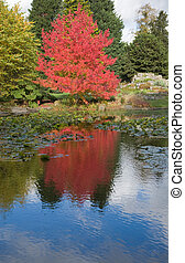 red color in the foliage, autumn,
