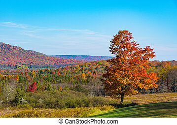 Red-colored tree with a forest in vibrant fall colous in the background