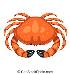 Red crab. Isolated illustration of seafood on white background