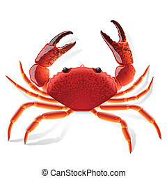 Vector illustration of a red crab