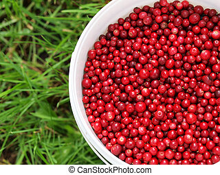 Red cranberries in a bucket