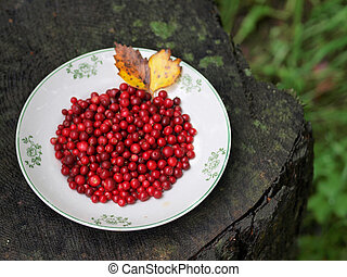 Red cranberries on a plate