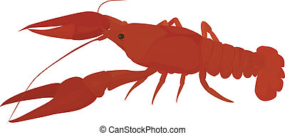 red crayfish - isolated red river crayfish, boiled crawfish...