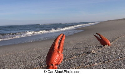 Red crayfish legs by the sea