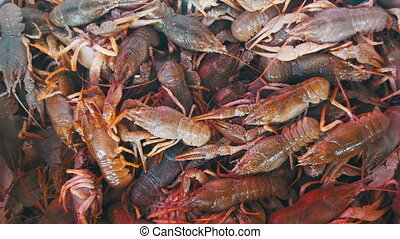Red Crayfish on the Counter Fish Market. - Live Red Crayfish...