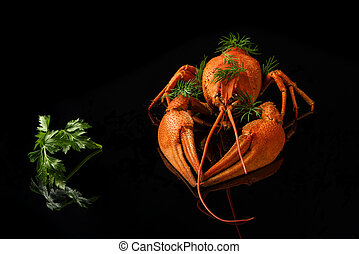 Red crayfish with parsley and fennel on a black background...