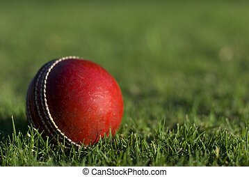 Red Cricket Ball On Grass - A red cricket ball on green...