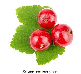 Red currant berry with leaf isolated on white background macro. Top view