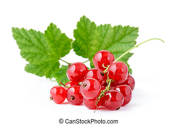 Red Currant. isolated on White background