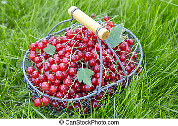 Red currant in a basket on green grass