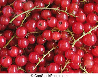 Red Currant - Red currants background