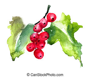 Red Currant, watercolor illustration