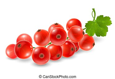 Red currant sprig. Fresh ripe berries of red currant on...
