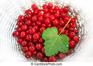 red currant in a white basket