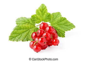 Red Currant. The file includes a excellent clipping path
