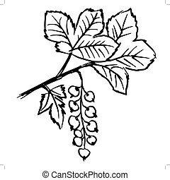 red currants - hand drawn, sketch illustration of red...