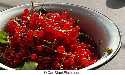 red currants in a bowl