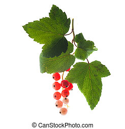 red currants with a green leaf isolated on white