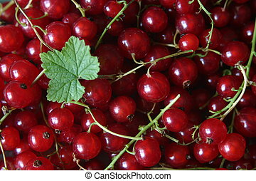 Red currants with green leaf