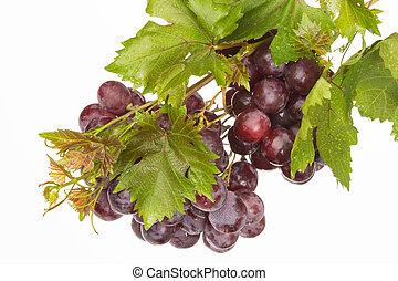 red dark grape