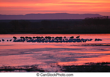 Red Dawn On The Refuge