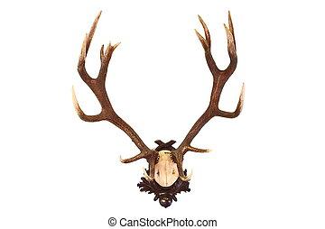 red deer buck isolated trophy