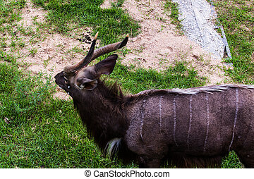Red Deer  - Red Deer