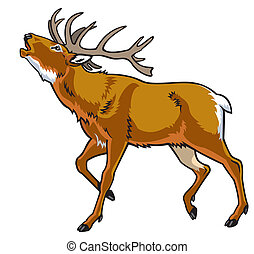 red deer stag ,side view image isolated on white background