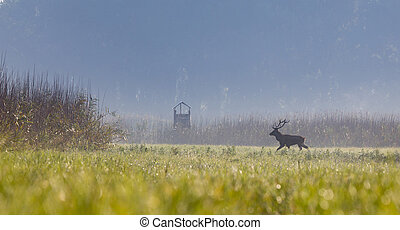 Red deer walking on meadow