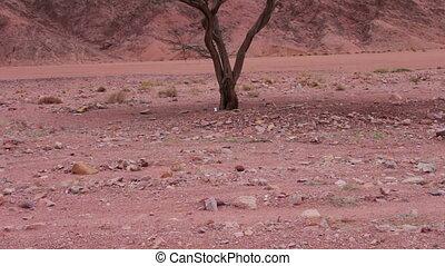 Red desert landscape of Sinai Mountains
